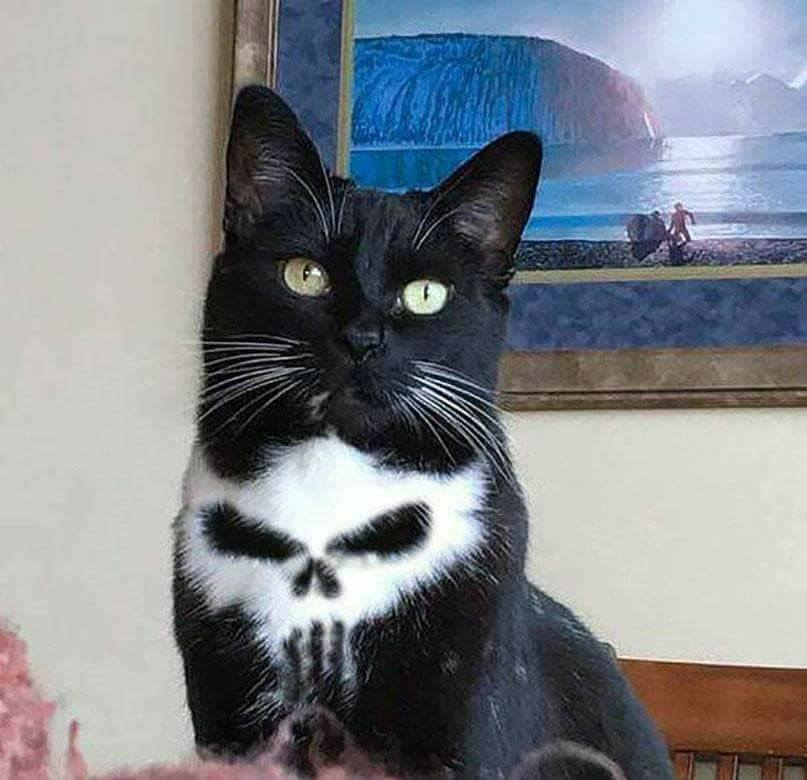 Punisher Kissa